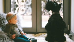 dogs-and-babies